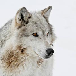 Athena Mckinzie - Wolf I