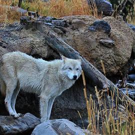 Athena Mckinzie - Wolf In The Wild