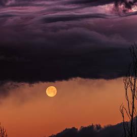 Buffalo Fawn Photography - Wolf Moon