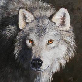 Crista Forest - Wolf Portrait