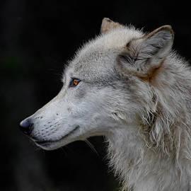 Athena Mckinzie - Wolf Profile