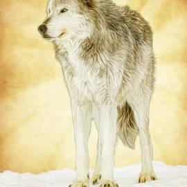 Steve McKinzie - Wolf Shine