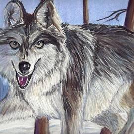 Jay Johnston - Wolf Stare