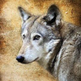 Steve McKinzie - Wolf Texture