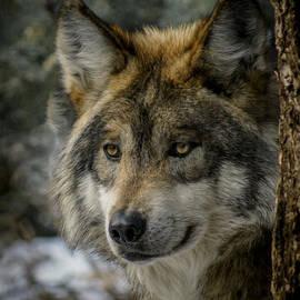Ernie Echols - Wolf upclose 2