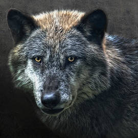 Joachim G Pinkawa - Wolfman