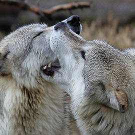 Athena Mckinzie - Wolves Playing