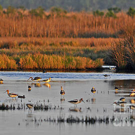 Al Powell Photography USA - Wonderful Wetlands