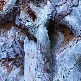 Jouko Lehto - Wood abstarcts