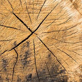 Matthias Hauser - Wood - cut surface of a tree log