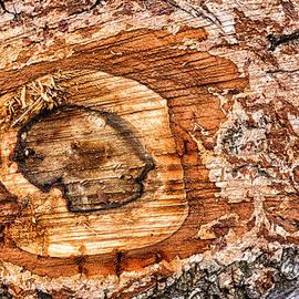 Matthias Hauser - Wood detail