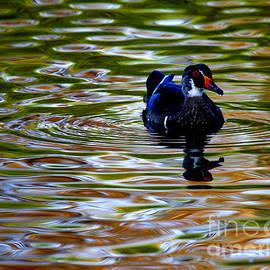 John Tsumas - Wood Duck Reflections