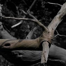 Clive Beake - Wood Sprite