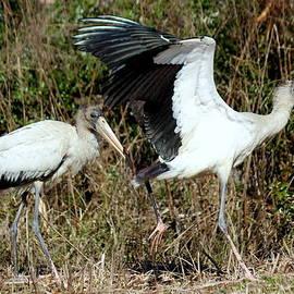 Rosanne Jordan - Wood Stork Duo