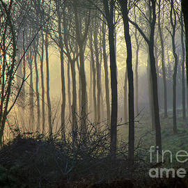 Sophie De Roumanie - Woodland Glow