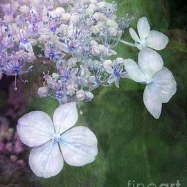 Kathi Mirto - Woodland Hydrangea In Blue
