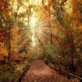 Jessica Jenney - Woodland Light