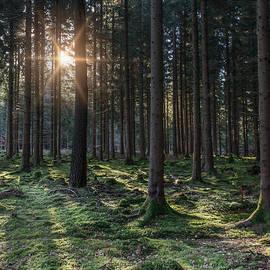 David Tinsley - Woodland Sunrise