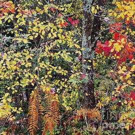 Alan L Graham - Woodland Tapestry