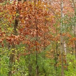 Lori Frisch - Woodland Walk