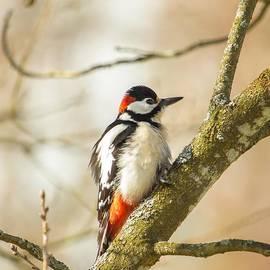Rose-Maries Pictures - Woodpecker enjoying spring