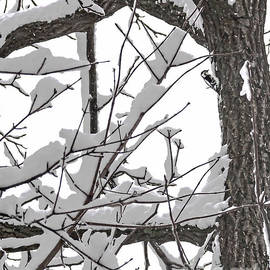 Lance Theroux - Woodpecker In Snow