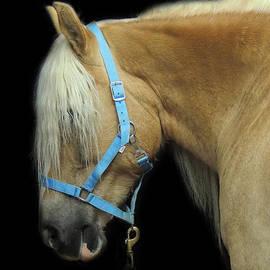 Mim White - Work Horse