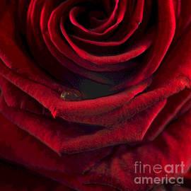 Wobblymol Davis - Wrapped In Red Velvet