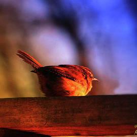 EricaMaxine  Price - Wren in Early Morning