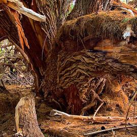 Ed  Cheremet - Wrinkled Old Tree