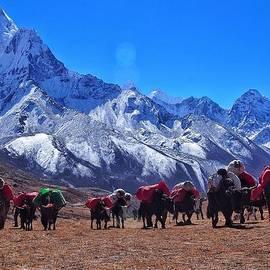 Hilary Rhodes - Yaks of the Khumbu