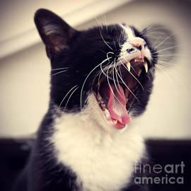 Trish Mistric - Yawn Like You Mean It