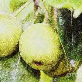 Sandy Moulder - Yellow Apples