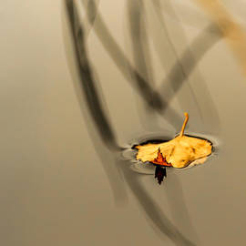 Aldona Pivoriene - Yellow birch leaf on water