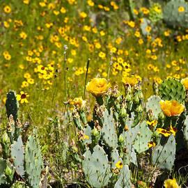 Mark Weaver - Yellow Blooms