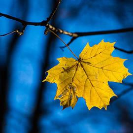 Alexander Senin - Yellow blues - Featured 3