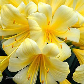 Jeannie Rhode Photography - Yellow Clivia Miniata Bouquet