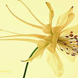 Chris Berry - Yellow Columbine Study