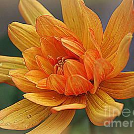 Photographic Art and Design by Dora Sofia Caputo - Orange Dahlia and Raindrops