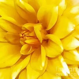Kathleen Struckle - Yellow Dahlia