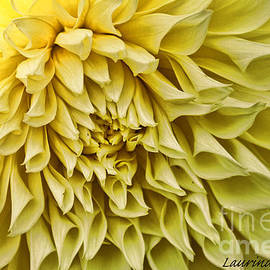 Laurinda Bowling - Yellow Dahlia