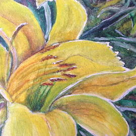 Carol Warner - Yellow Daylily