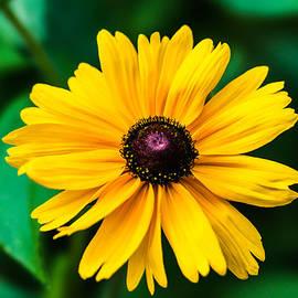 Alexander Senin - Yellow Flower - Featured 3