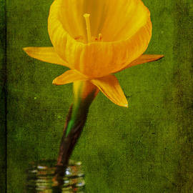 Marco Oliveira - Yellow Flower In A Bottle II