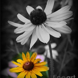 Photographic Art and Design by Dora Sofia Caputo - Yellow Flower on Black and White