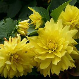 Dimitry Papkov - Yellow flowers