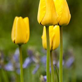 Mike Santis - Yellow flowers