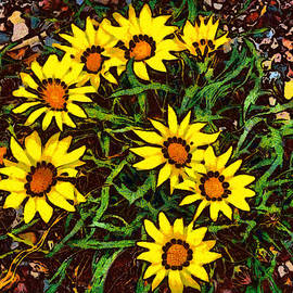 Ernie Echols - Yellow Gazanias