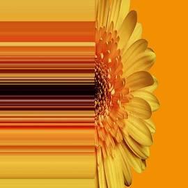 Nancy Pauling - Yellow Gold
