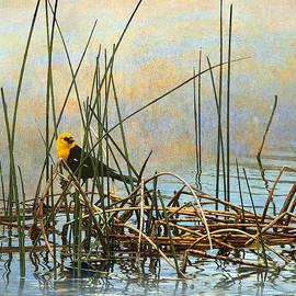 R christopher Vest - Yellow Headed Blackbird On Rush